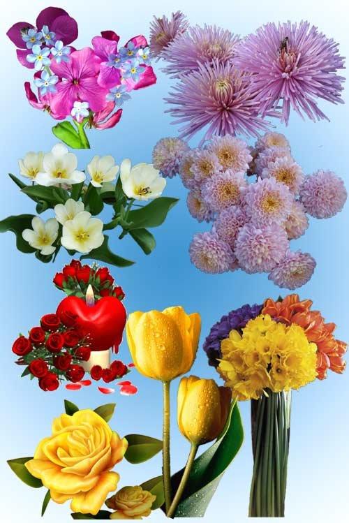 Клипарт Цветы букеты