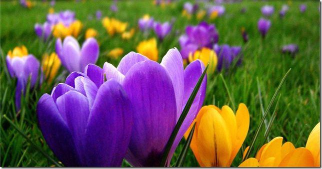 Цвета весны