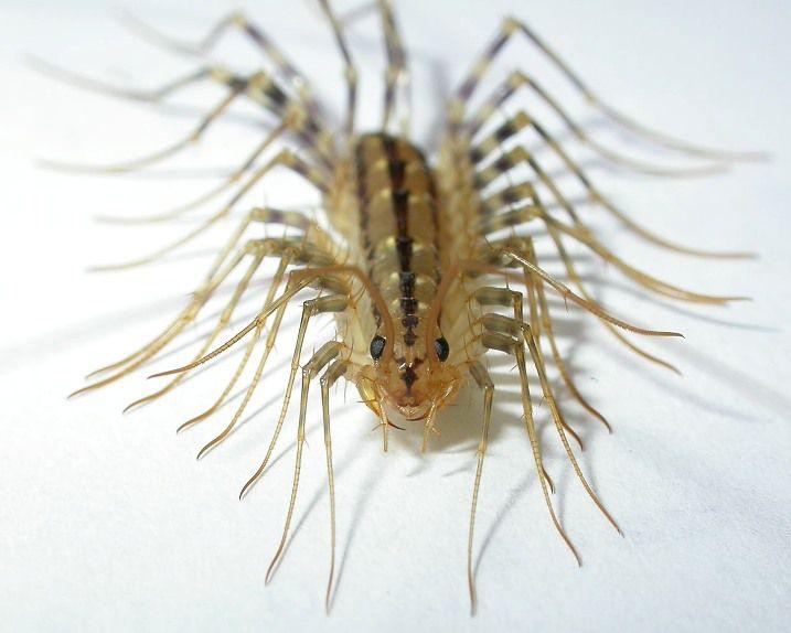 5 самых опасных насекомых