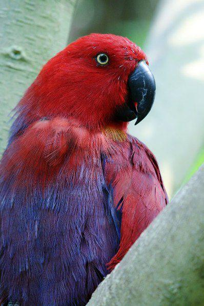 Красота птичья