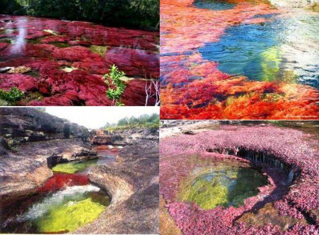 Психоделическая река Cano Cristales