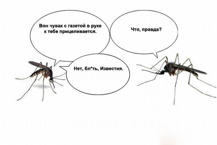 О чем пищат комары