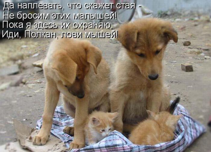 Вручение аттестатов, трогательные картинки с животными и с надписями