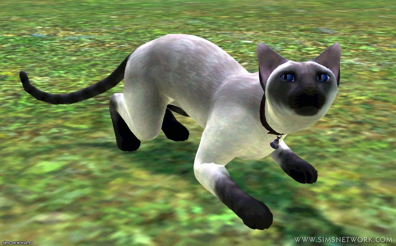 20110916-pets-14.jpg