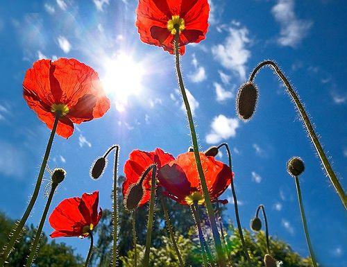 «Разобранные» цветы от фотографа Qi Wei