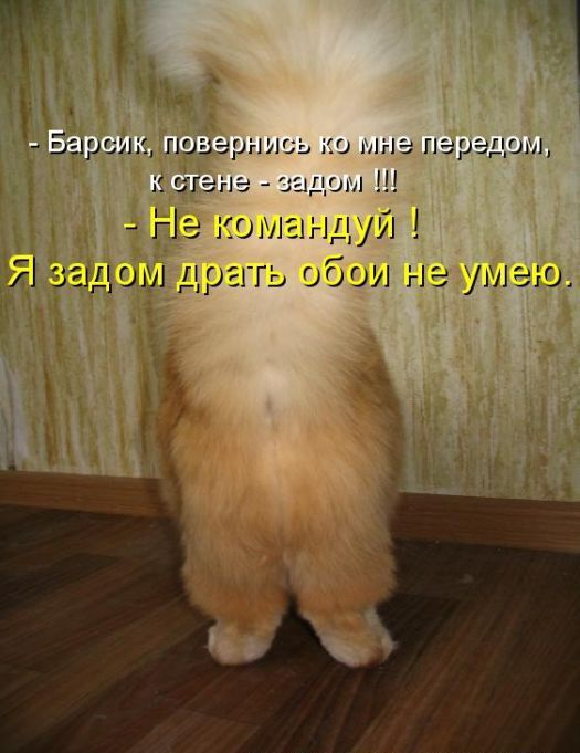 derut-rizhuyu