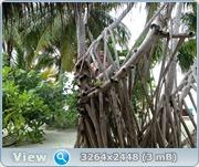 http://i3.imageban.ru/out/2012/01/10/2622ddc6caa0fa38c6b7b8f5b14e988f.jpg