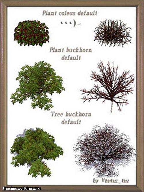 default plants 1.jpg