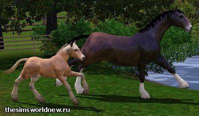 foal3.jpg