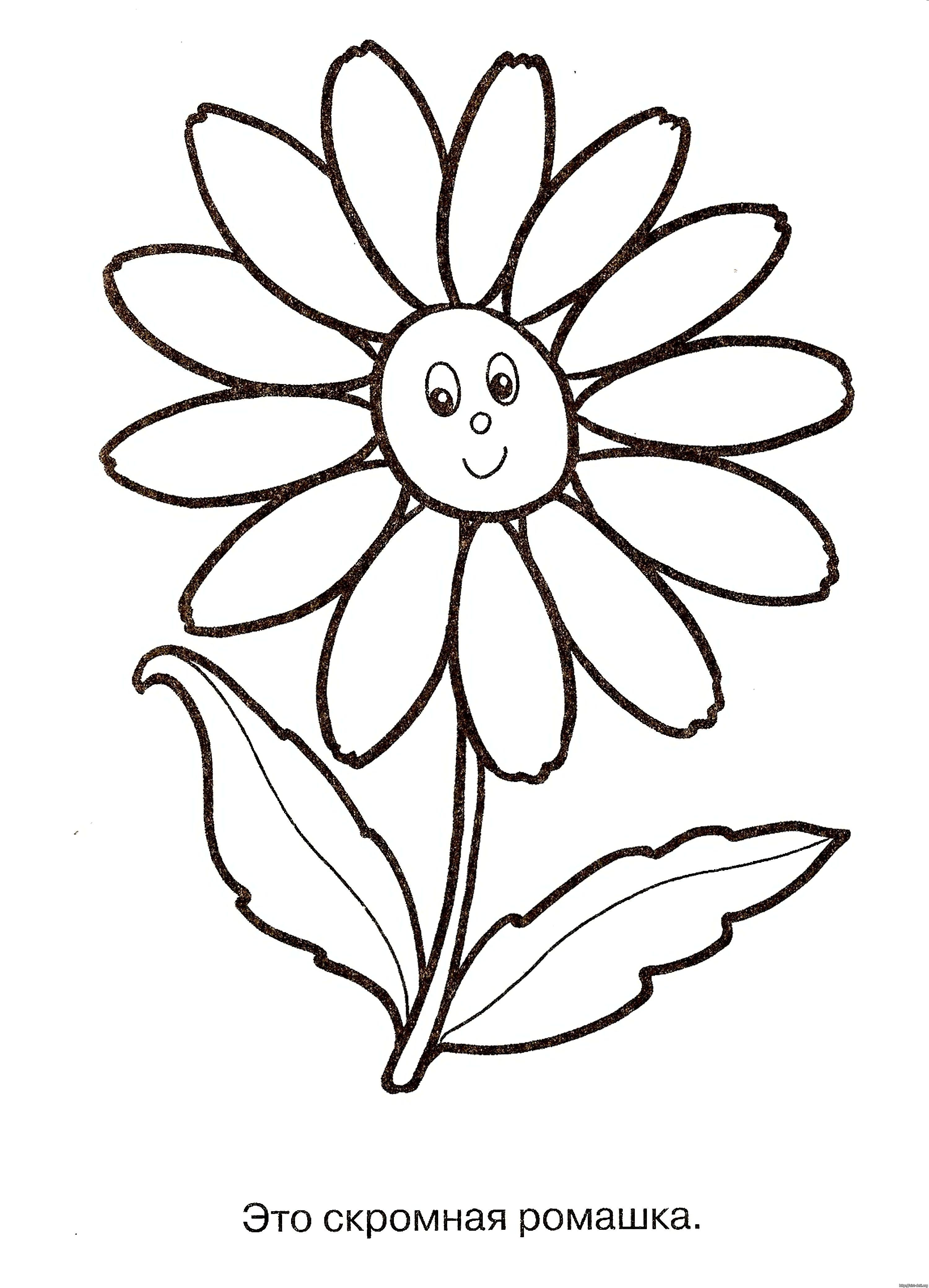 Картинка ромашка для детей раскраска 4