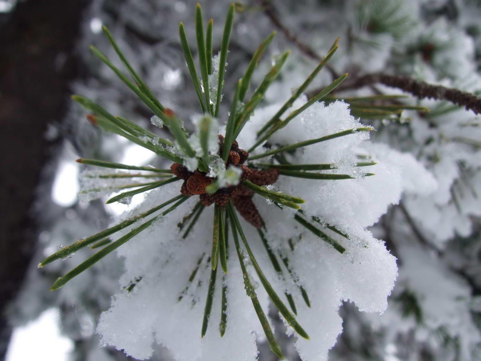 природа1 (1).JPG