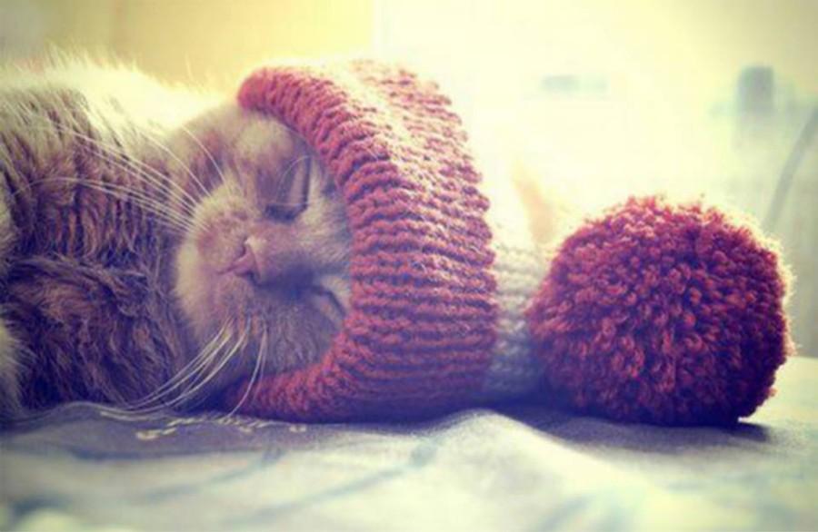 В теплой шапочке