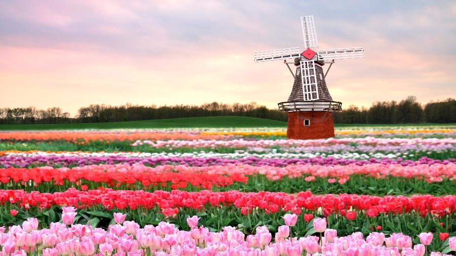 Где-то в Голландии