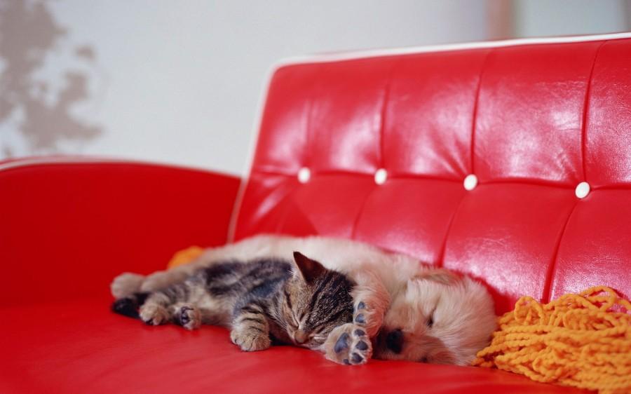 Сонные животные