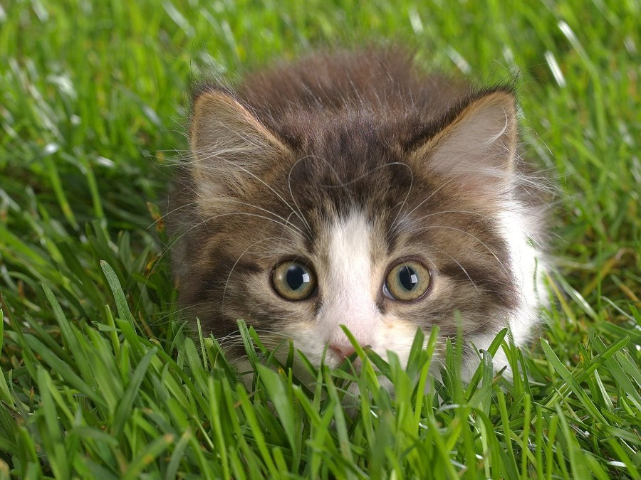 Глазастый котенок