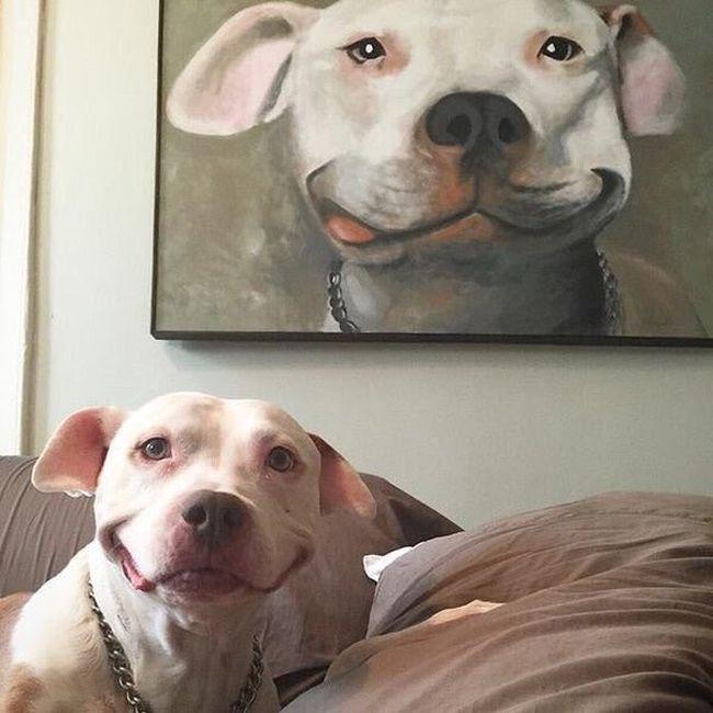 Портрет моего пса 1