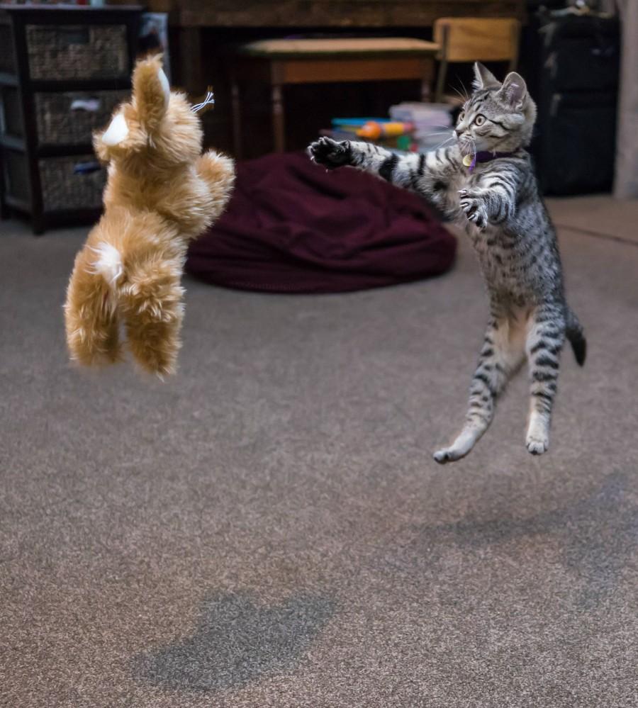 Животные в прыжке