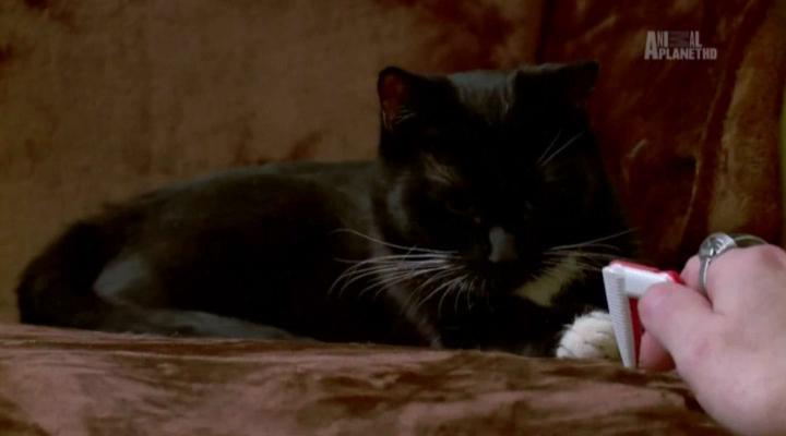 Адская кошка (7 сезон: 2-7 серии) (2016) HDTVRip
