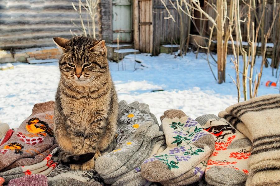 Деревенский котейка