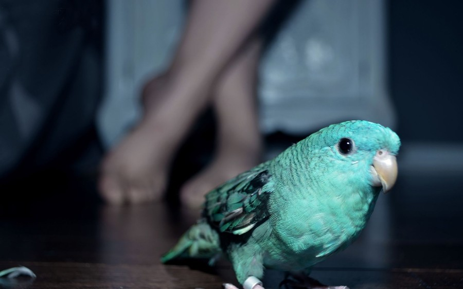 Портрет моего попугая