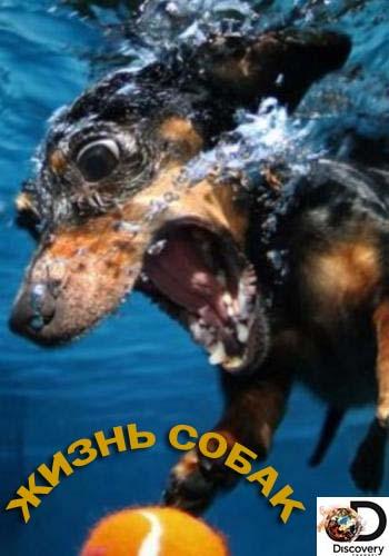 Discovery: Жизнь собак / Dogs The Untold Story [S01] (2016) HDTVRip 720p от HitWay | P1