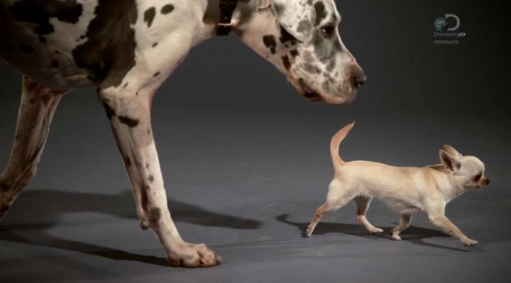Discovery. Жизнь собак (1 серия) (2016) HDTVRip