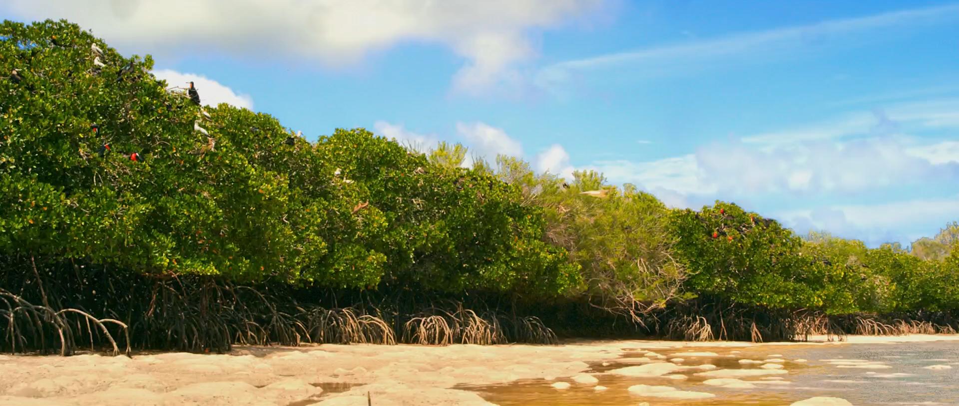 Альдабра. Путешествие к таинственному острову | WEB-DL 1080p | iTunes