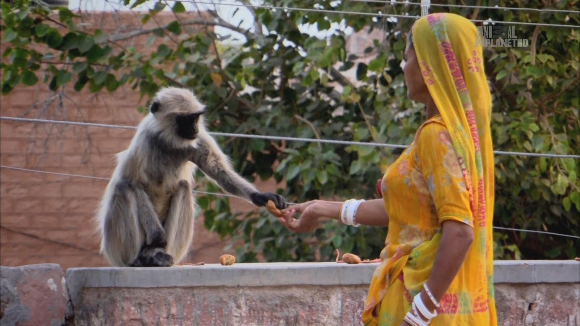 В дебрях Индии (1-3 серии из 5) (2011) HDTV 1080i