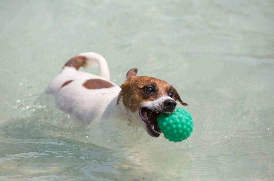 Игры в бассейне