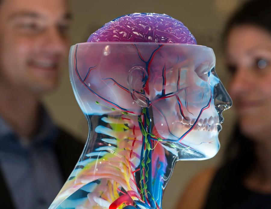 Изучаем анатомию