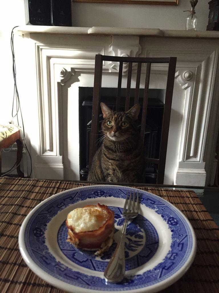 Я готов принимать пищу