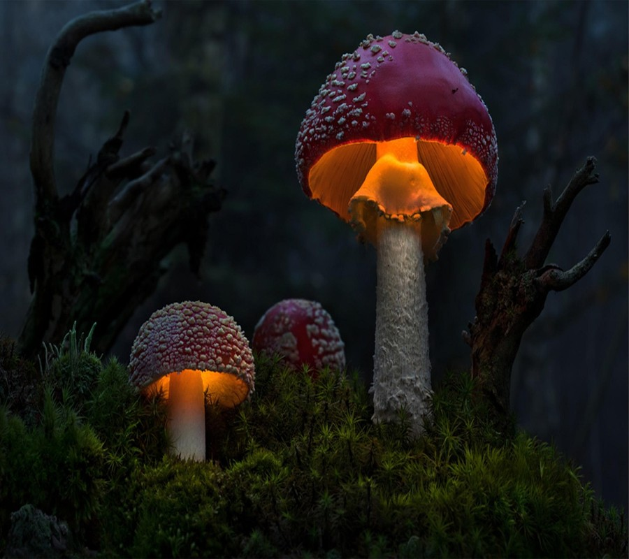 Грибочки с подсветкой