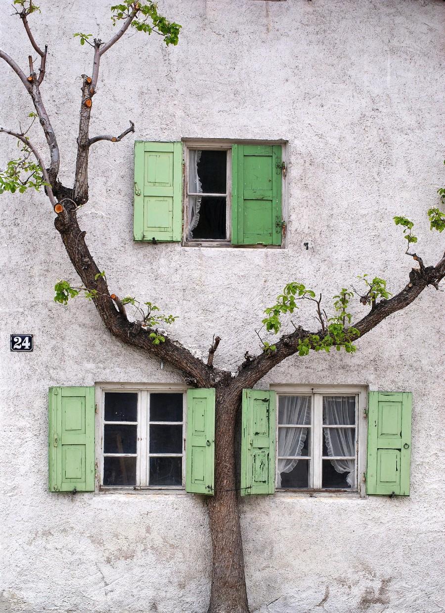 Дерево у стены