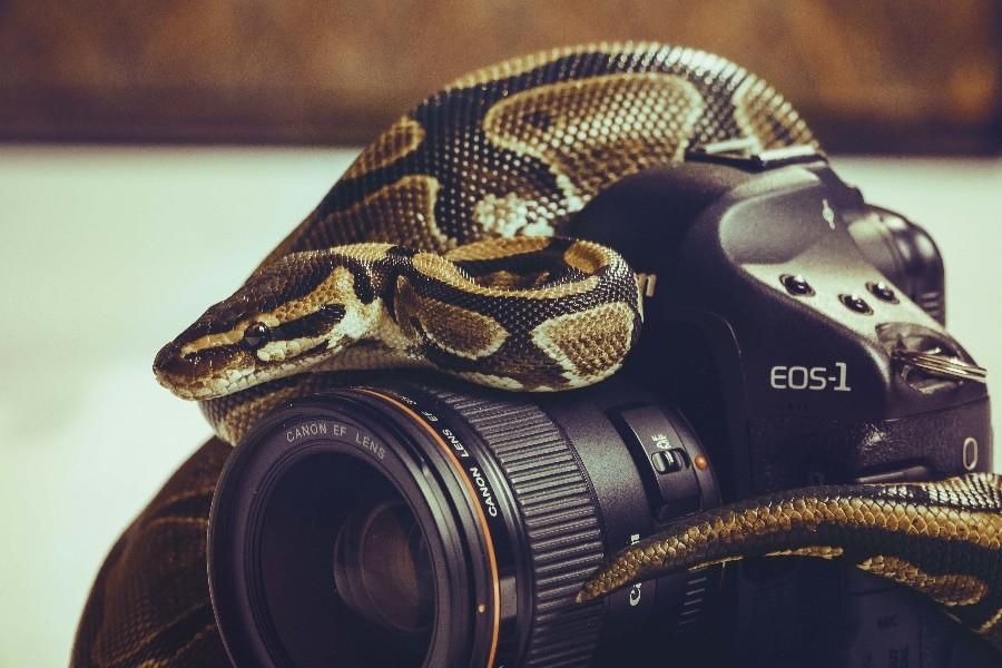 Змея на камере
