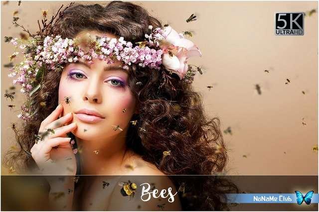 Фоны и наложения - Creative Market - 5K Bees Overlays - 1931413 [PNG]