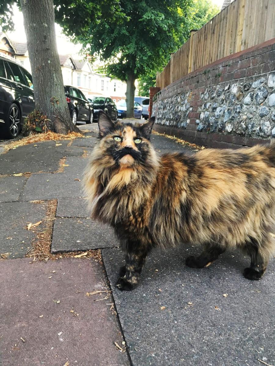 Усатая кошка