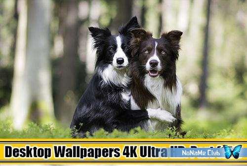 Обои - Desktop Wallpapers (4K) Ultra HD. Part (141) [JPG]