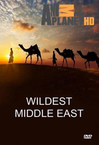 Discovery: Природа Ближнего Востока / Wildest Middle East (2015) HDTVRip  [H.264/720p-LQ] (Сезон 1, серии 1-5 из 5)