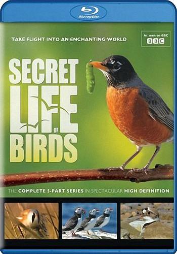 BBC. Тайная жизнь птиц / BBC. Secret Life of Birds (2010) BDRip [H.264/1080p] (Серии 1-5 из 5) [PR]