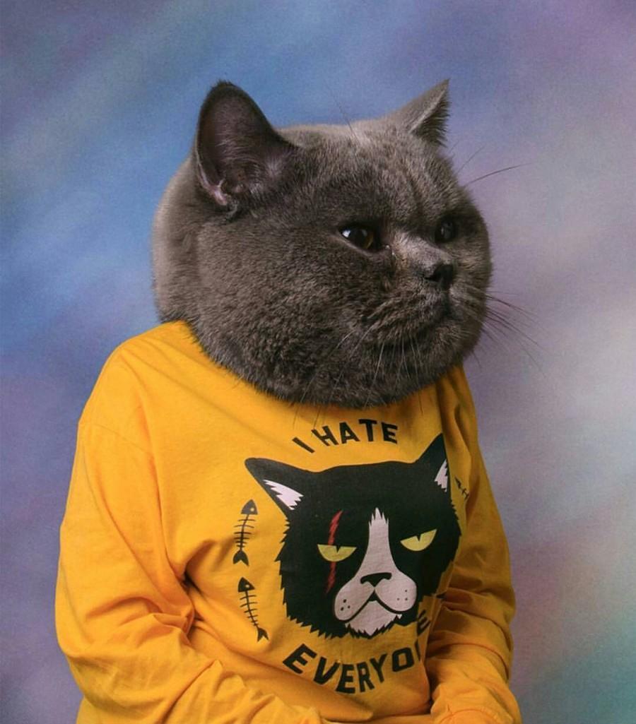 Котейка в свитере
