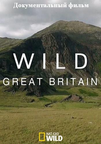 NGW: Дикая природа Великобритании / Wild Great Britain (2018) HDTV [H.264/1080i-LQ] (cерии 1-3 из 3)