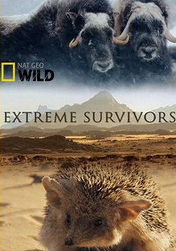 NGW: Выжить несмотря ни на что / Extreme Survivors (2014) HDTV [H.264 / 1080i-LQ]