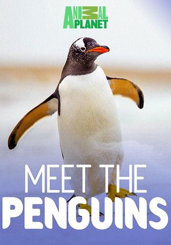 Animal Planet: Знакомство с пингвинами / Meet the Penguins (2017) HDTV [H.264/1080i-LQ] (cерии 1-8)