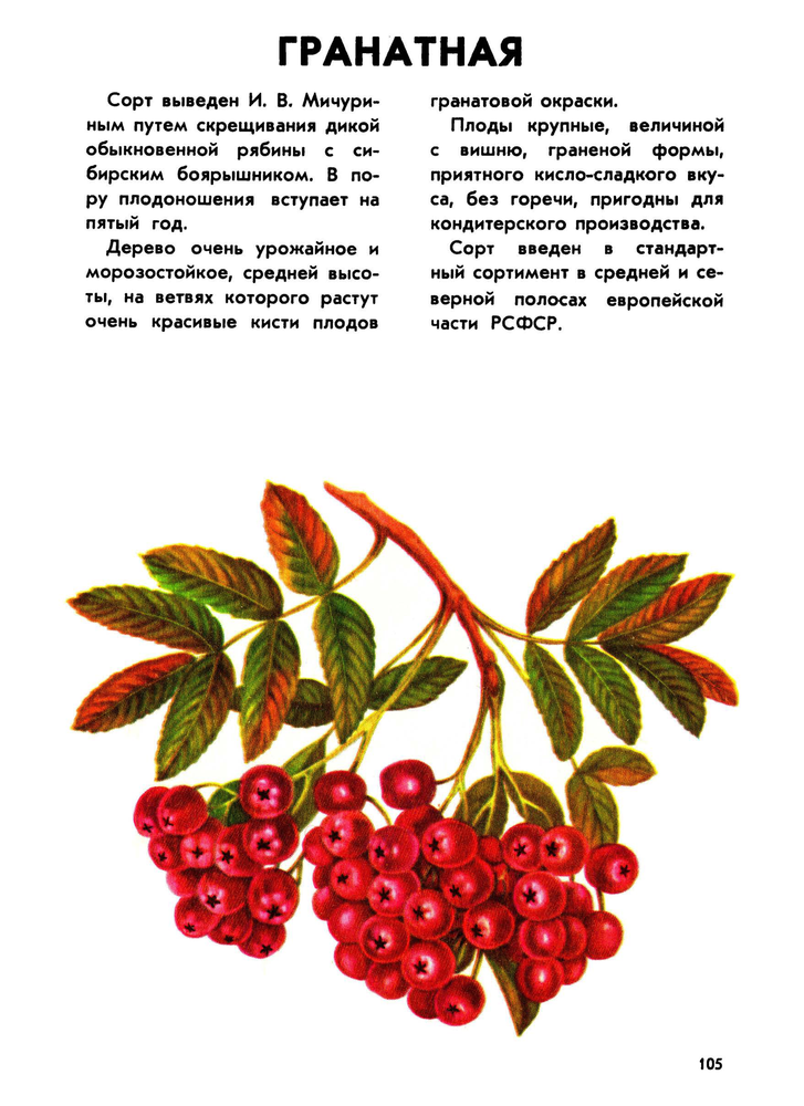 https://i3.imageban.ru/out/2019/02/08/9545d6aa4739308353af61e12ec7d9d8.png