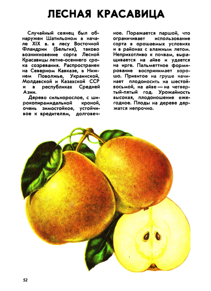 https://i3.imageban.ru/out/2019/02/08/ccf82cd14c0ba3e53b134914809e3add.png