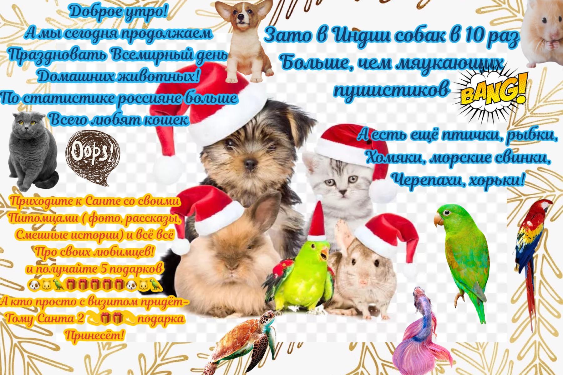 https://i3.imageban.ru/out/2019/12/01/cc94db0615985ab95723b23c03d57b9c.jpg