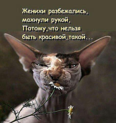https://i3.imageban.ru/out/2020/02/04/b93cb24cdbcc31c1308125e46f05ecfb.jpg