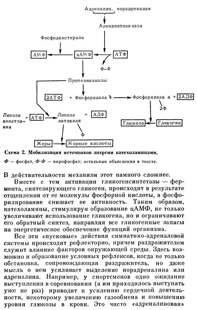 https://i3.imageban.ru/out/2020/06/02/e2a79214994107dcbfa2cee3151473a1.jpg