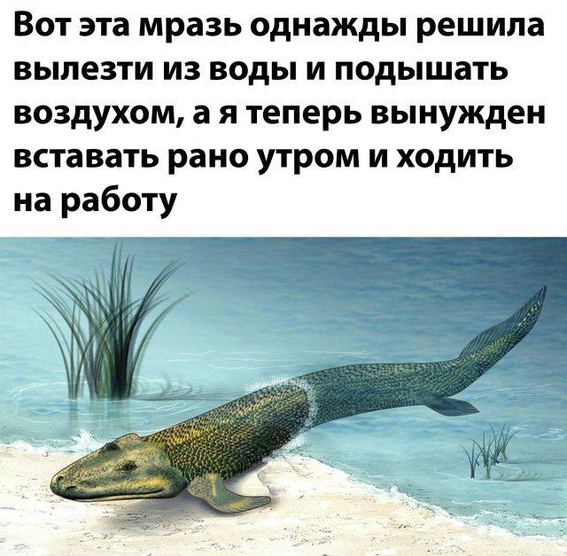 https://i3.imageban.ru/out/2020/09/01/07d86a88c9c9d960d939ca924b07821e.jpg