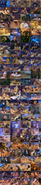 Воспоминания на всю жизнь / Да здравствует Италия! / Tutta Una Vita / Viva Italia! / Memories of a Lifetime (1992) DVD9